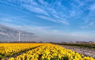 A giant cloud-cutter guarding the fields of daffodils.