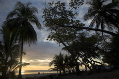 IMG_6615 (Maximilian Stimmel) Tags: sunset beach costarica america centralamerica sonnenuntergang sun colorful tress palm ocean sea pazific rainforest tropical puestadelsol summer summervibes travel travelvibes
