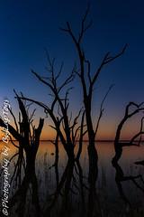 IMG_5484 (biglaptogs) Tags: barmera lakebonney riverland sa states sunsetsunrise