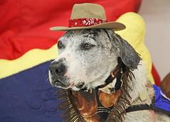 Pinto in School (Ellsasha) Tags: dogs therapydogs educationalambassadors color colours school
