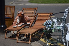 Sun tiger (Tom Doel) Tags: funny animal stuffedtoy road street deckchair toy tiger