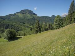 P6110154 (turbok) Tags: almlandschaft berge bärnfeichtnmölbing landschaft totesgebirge weide wörschachwald c kurt krimberger