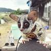 #Repost @pizzatoru ・・・ いつもお目目キラキラ✨ . . . . . . . #ピザトル #猿 #monkey #ショウガラゴ #ブッシュベイビー #エキゾチックアニマル#ふわもこ部#ペット#pet#可愛い#animals #animalkingdom #animallover #monkeys #petstagram #petlover #bushbaby #gizmo #galago#animallovers #cute #cutebaby #ピザ #baby # (FluffWonderland) Tags: animalkingdom animals ブッシュベイビー petstagram babyboy ピザトル ショウガラゴ animallovers monkey gizmo eyes ふわもこ部 repost yoda ピザ cute 猿 エキゾチックアニマル petlover monkeys galago cutebaby animallover baby 目 可愛い pet bushbaby ペット