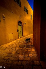 A stray dog in the old city of jaffa (tchia sheffer) Tags: straydog oldcity goldenhour dog canon color pavingstone jaffa fineart