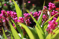Orquídea terrestre (Wellington-stm) Tags: flower flor orquídea terrestre orchid santarém outdoors brasil