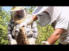 Bee Removal Miami (miamibeeremoval) Tags: bee removals miami