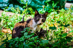 Meet the Family (George Plakides) Tags: cat mother kitten cute stray