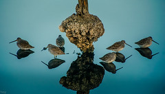 Birds, Corte Madera (It's Hoy) Tags: birds nature