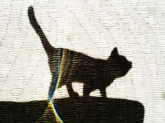Silhouette: Cat on a Hot Tin Roof (Silke Klimesch) Tags: macromonday silhouette mm curtain texture sunlight schleich schleichtier cat katze katzengehenimmer theinternetlovescats catonahottinroof kitty chat gatta gata kotka kissa kedi кошка 猫 silueta spektralfarben spectralcolours toy closeup makrofotografie nahaufnahme olympus omd em5 mzuikodigitaled60mm128macro microfourthirds nikcollection
