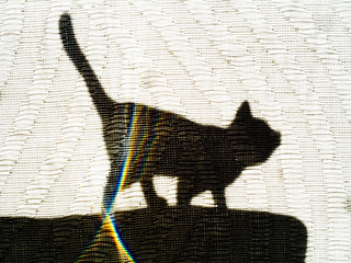 Silhouette: Cat on a Hot Tin Roof