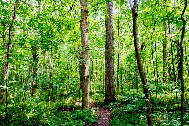 Lindenwood Nature Preserve - June 22, 2017