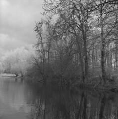 III (Other dreams) Tags: oxbowlake oxbow lake pomerania poland reflection vistula trees forest puddle pond fp4plus nofilter nature landscape paranols rolleiflex35f