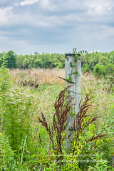 post 6196 (cjnewlife12) Tags: suffolk fence post weeds country