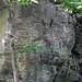 Columbus Limestone (Middle Devonian) (Hayden Run, Dublin, Ohio, USA) 7