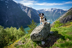 My best friend (Richard Larssen) Tags: richard richardlarssen larssen landscape dog kjeåsen hardanger eidfjord norway norge norwegen nature sony scandinavia sel1635z a7ii teamsony sonyalpha lake animal photography richardlarssenphotography