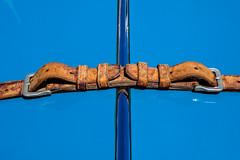 Hood (tvdijk19) Tags: car hood classic auto motorkap klassieker klassiek oud old graphic color blue leather belt