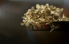 Receiving (Captured Heart) Tags: hydrangea driedflowers teacup chinacup receiving illuminate stillness stilllife prayer