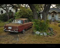 Rover... Sit. (Gordon Hunter) Tags: rover p6 2000 auto car red old sit residential urban neighborhood morning yard home house victoria bc canada gordon hunter nikon d5000 trees bush lawn