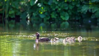 Family Swim!
