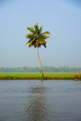 One Tree (Free As I Can Be) Tags: coconuttree backwaters kerala