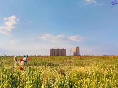 Зверушки 0392 (2016.05.21) (vladsky78) Tags: ильичёвск небо животные зелень цветы поле собака