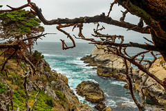 North Point with Red Moss 2 (dennisjohnston17) Tags: pointlobos redmoss pacific cypress ocean waves aqua northpoint carmel california breakers