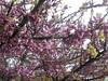1276 (en-ri) Tags: fiorellini little flowers sony sonysti albero tree