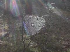 Spider web DSCN3775