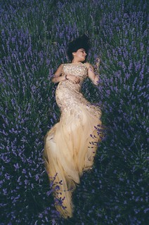 The lavender queen