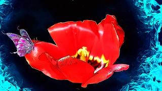 Stratford Ontario ~ Canada ~ Shakespearean  Garden Botanical  ~ Heritage ~ Butterfly ~ Tulip