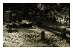 Fence (TooLoose-LeTrek) Tags: gx8 cemetery monotone sun lowsun grave headstone