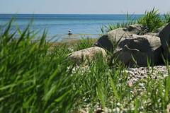 sunny side of the isle (Fehmarn, Baltic sea)