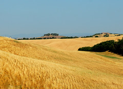 Crete estive 1 (anto_gal) Tags: toscana siena monteroni arbia 2017 estate crete grano spighe papaveri