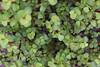Bush (carlahernando1) Tags: nature green zenital plant fresh garden