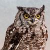 Owl at Anston Butterfly House (Cerdic Elesing) Tags: naturalworld birdunknown birds butterflyhouse england kodakektar southanston southyorkshire xequals northanston unitedkingdom