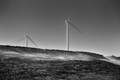 Taking in Views of Wind Turbines While Driving Along the Interstate (Black & White) (thor_mark ) Tags: blackwhite blueskies bluff capturenx2edited colorefexpro day7 drivealongcolumbiariver hillside lookingsouth nature nikond800e project365 triptomountrainierandcolumbiarivergorge windfarm windturbines windmillfarm arlington unitedstates