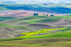 The Color Palette of the Palouse   (DROH) (cheryl strahl) Tags: washington palouse palette colors texture wheat steptoebutte farms redbarns agriculture farming droh dailyrayofhope