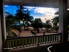 Trincomalee crow with a view (Flor Saluzzo) Tags: balcony beach palmtrees indianocean bluesky heaven crow gopro florenciasaluzzo trincomalee srilanka