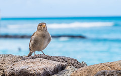 Perched at the Honolulu beach.. (Faisal Ahmed Photography) Tags: honolulu bird outdoor sea blue sony