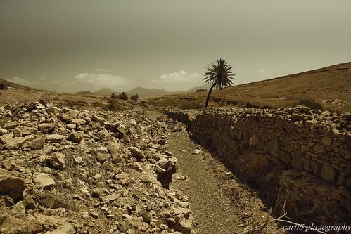 _MG_9524 desert fuerteventura