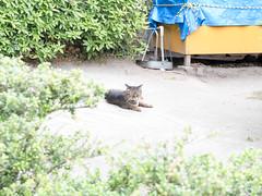 鹿兒島市 (yia_photo) Tags: 九州 鹿児島 桜島 大分 kyuushyu kagoshima sakurajima oita family trip japan