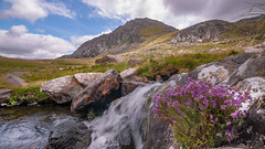 The colour of nature .... (Einir Wyn Leigh) Tags: landscape mountain river stream water heather colourful beauty nature natural wales cymru love