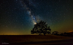 ~Stargazing!~ (swazileigh/ Langman Lightscapes) Tags: milkyway galacticcore oaktree nightphotography nightscape nightsky nikon nikond800 sanynezvalley santabarbara countryside countryroad explore californiacoast california tree onetree stars stargazing