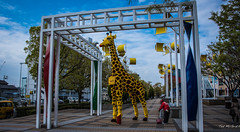 2017 - Japan - Osaka - Legoland - 7 of 25 (Ted's photos - For Me & You) Tags: 2017 cropped japan nikon nikond750 nikonfx osaka tedmcgrath tedsphotos vignetting legoland legolanddiscoverycenter legolandosaka tempozanisland tempozanmarketmall giraffe legolandgiraffe