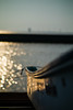sunset at the fishing port (N.sino) Tags: m9 leica summicron90mm sunset boat fishingport kisaeazu egawabeach 木更津 夕日 波 江川海岸 漁港 漁船