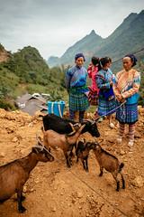 Goat Trader (syukaery) Tags: hmong vietnam asia southeastasian people family goat animal market travel local nikon d750 nikkor 24mm village culture indochina