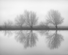 After the Flood no.2 (C A Soukup) Tags: california flood fog heavyfog reflection sonoma treesandfog