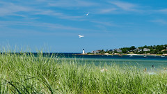 View of a lighthouse from Wingaersheek Beach (pete.staffier) Tags: ~photography ~typeofphotography oceanscape ~what ~waterelements ocean ~attribute ~colour blue green ~animal bird seagull lighthouse sea ~plant grass
