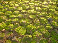 bewachsenes Basaltbuhnenpflaster (Jörg Paul Kaspari) Tags: baltrum sommer 2017 abendsonne buhne basalt basaltbuhne begrünt bewachsen algen grün green küstenschutz pave ebbe