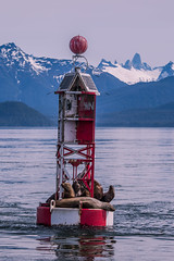 Petersburg Channel Buoy (robertdownie) Tags: sky red mountains water sailing calm channel alaska petersburg resting devils remote seals buoy marker thumb inside passage wrangell narrows eumetopias jubatus usa steller sea lions
